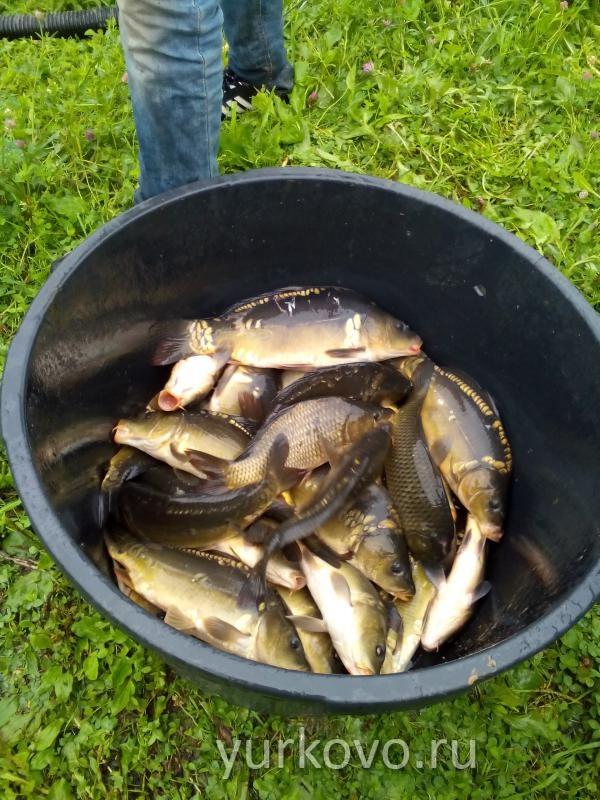 Рыбалка юрково можайского района
